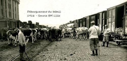 Débarquement du bétail, Dunkerque, 1GM